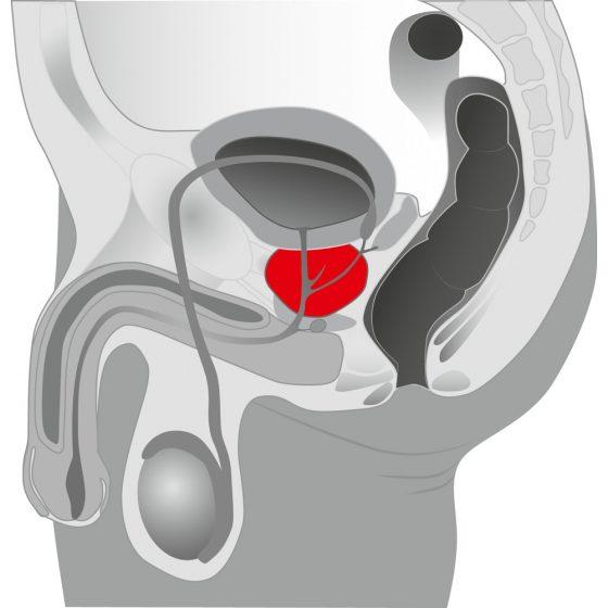YOU2TOYS Prostate Massager - otáčivý vibrátor na masáž prostaty
